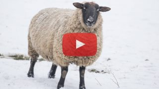 Snow and Wool: Levels of Teshuva